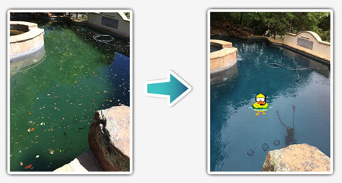 pool-peeps-green-to-clean